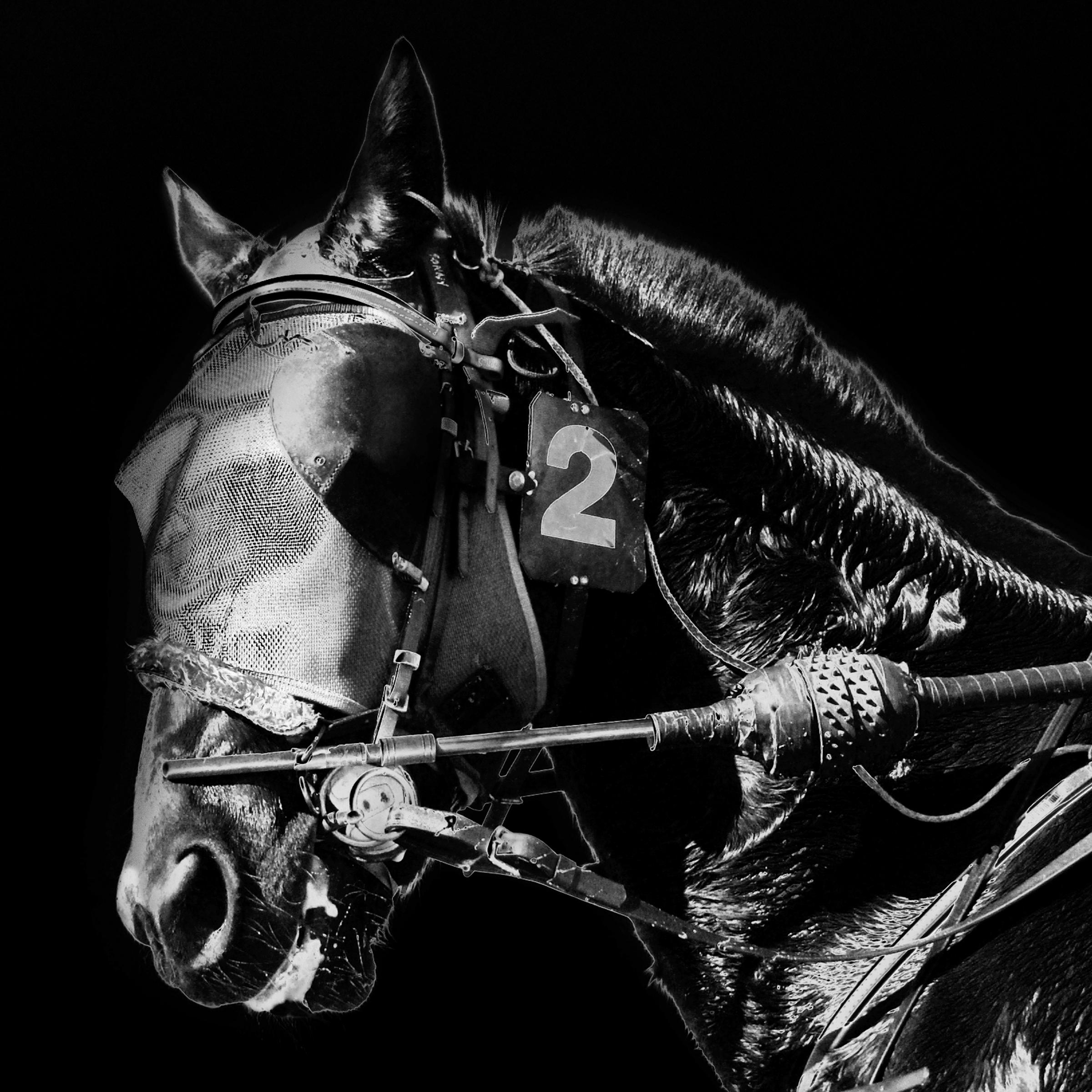 hunt_serana_the_sun_horse.jpg