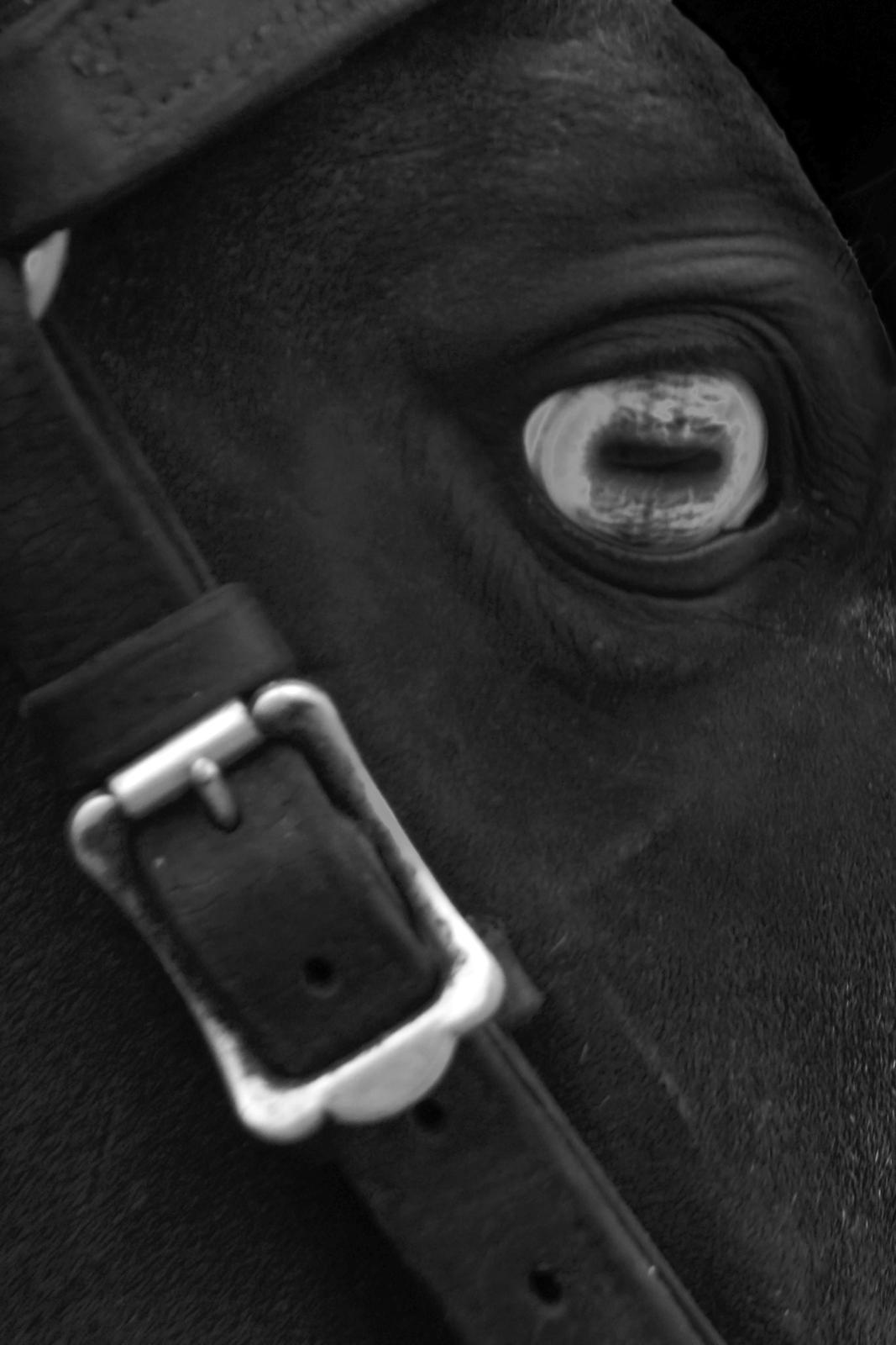 hunt_serana_blue-eyed_horse.jpg