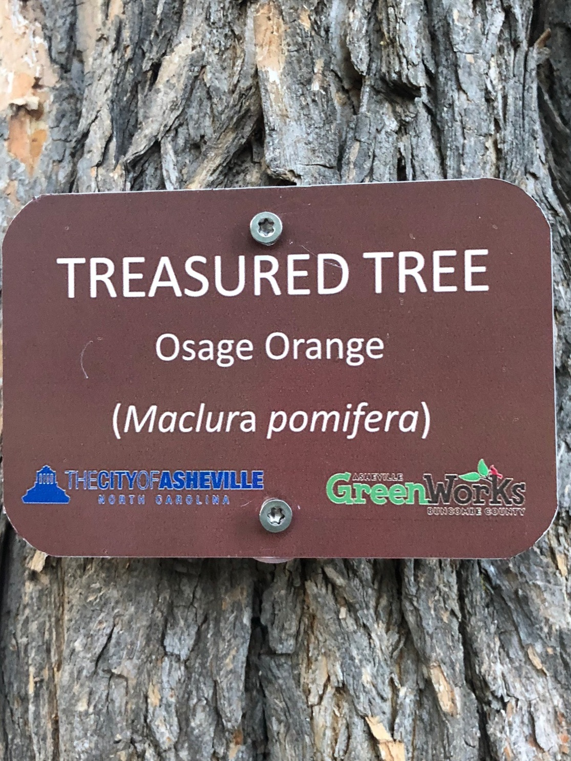 Treasured Tree