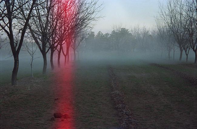 Light leak, Orchard