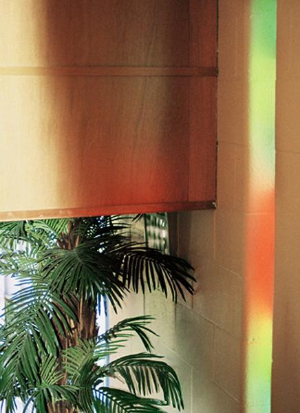 Palms, Prism