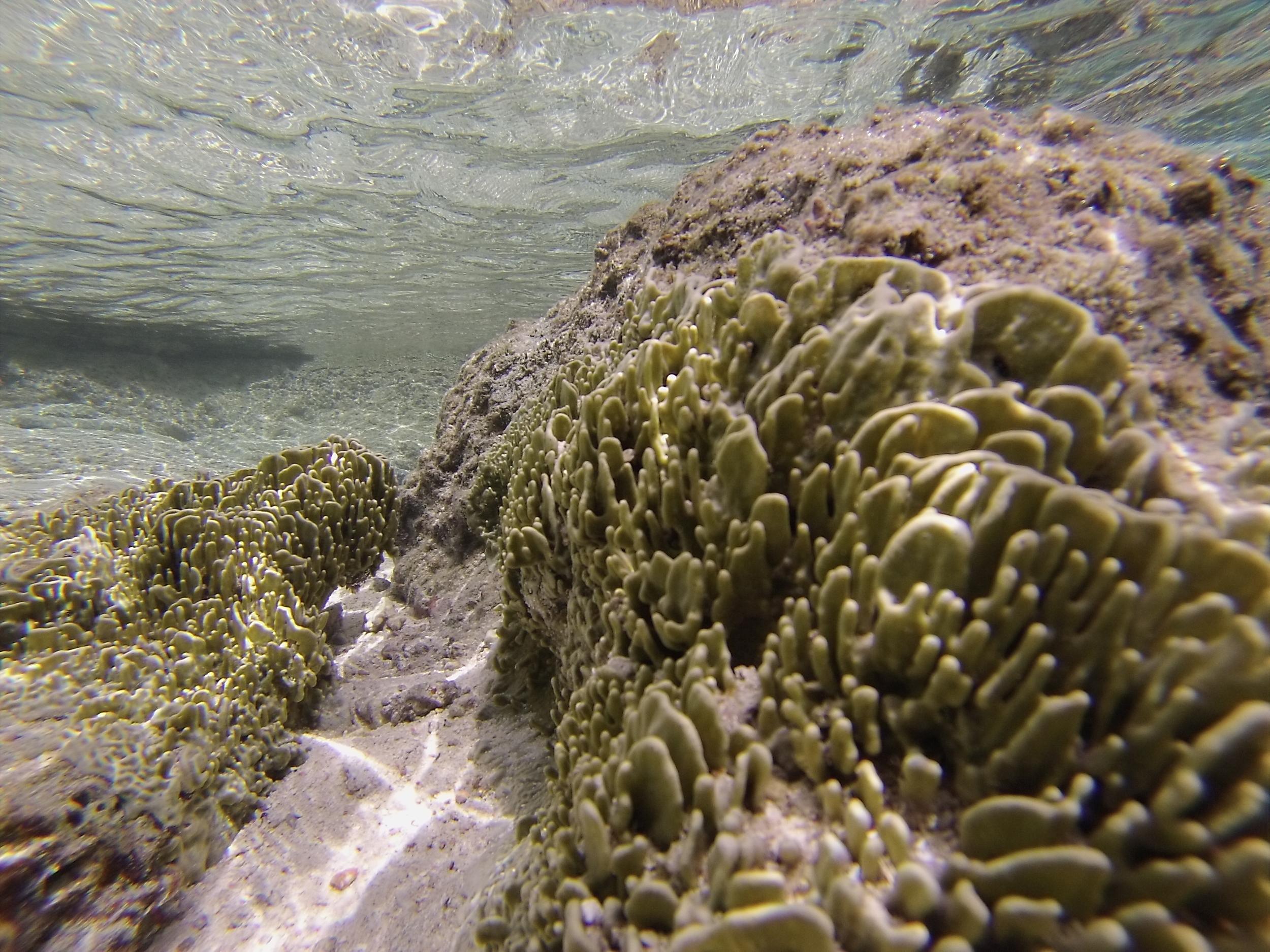 Symbiotic sponge in Moorea, French Polynesia