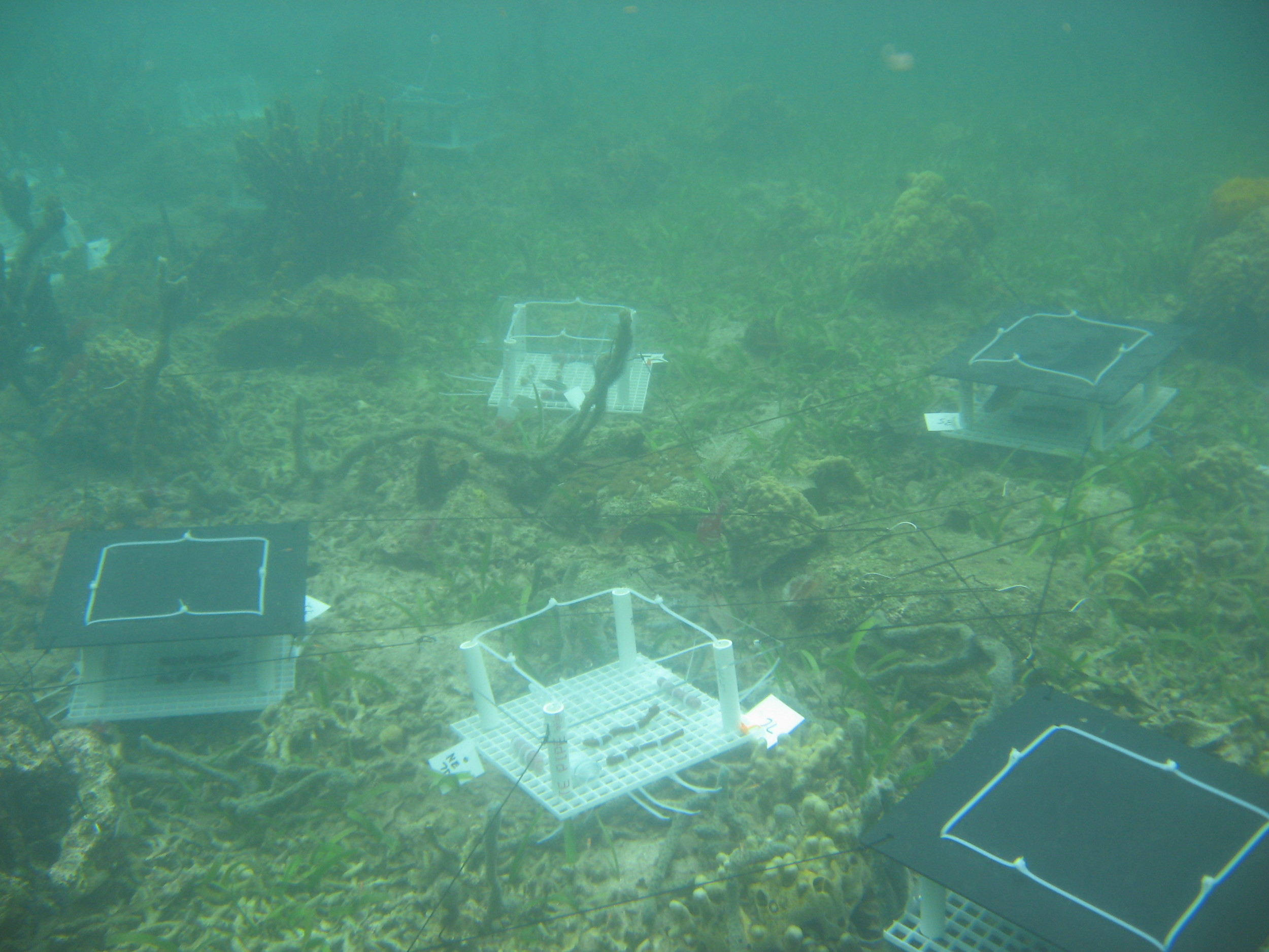 Shading experiment setup on a shallow reef in Bocas del Toro, Panama