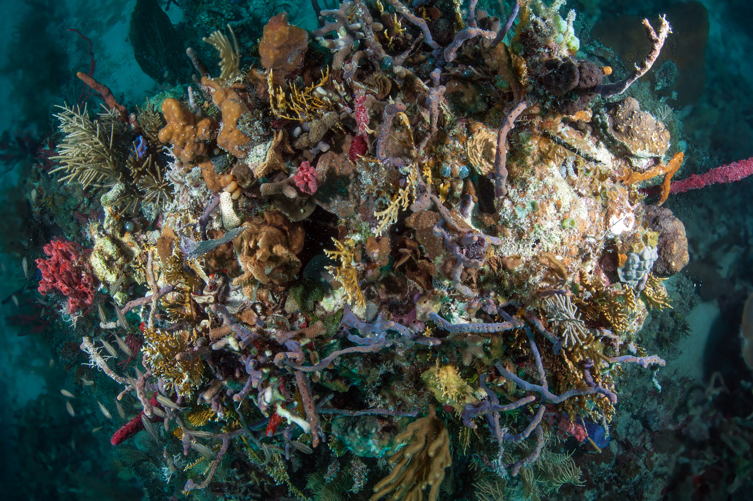 Metabolic diversityacross co-occurring sponge species may have an important rolein supporting diverse and complex reef communities like these in the Miskito Cays of Honduras .