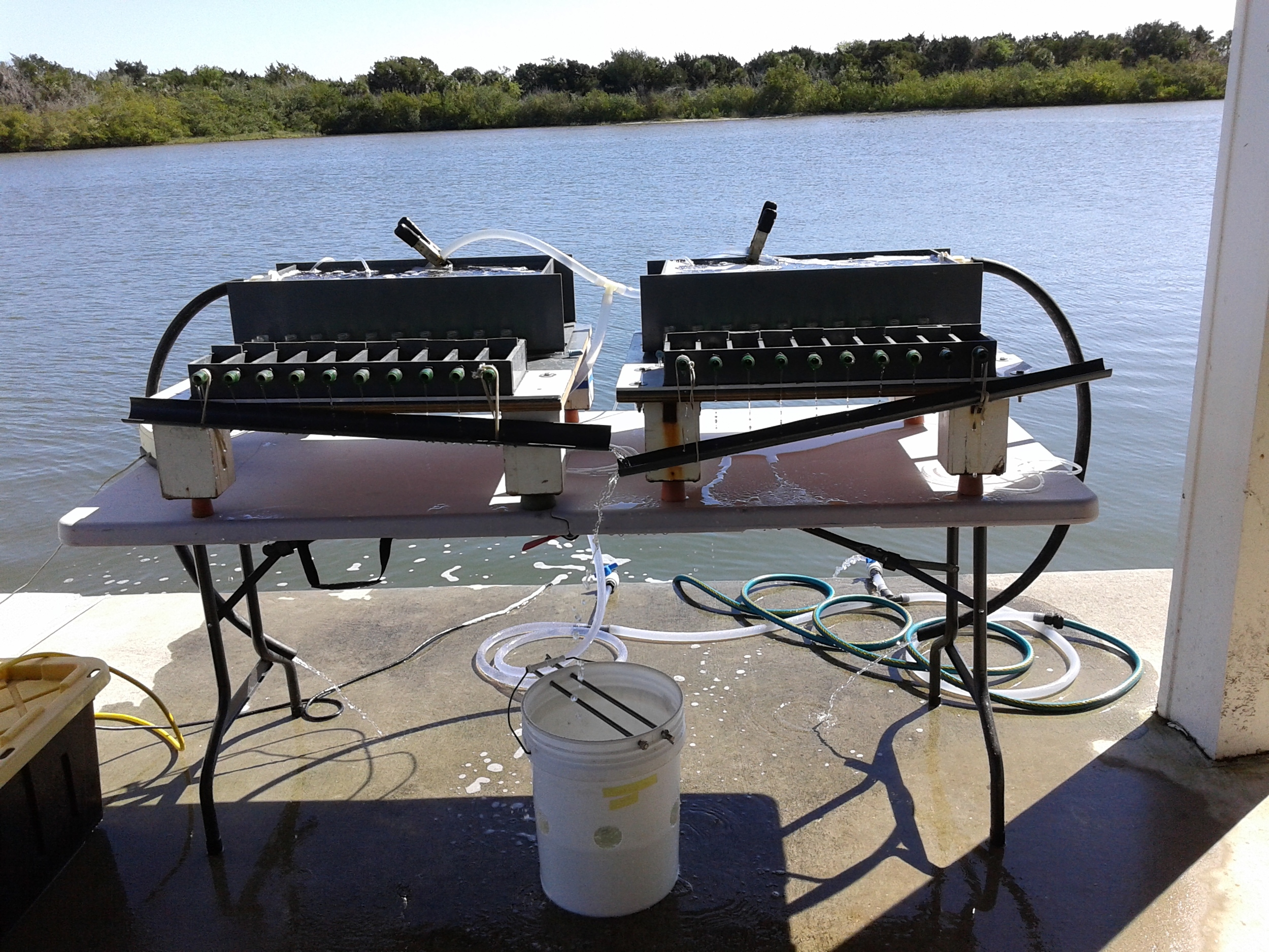 """We are also conducting feeding experiments in """"monster"""" raceways to assess feeding efficiency of bivalve grazers"""