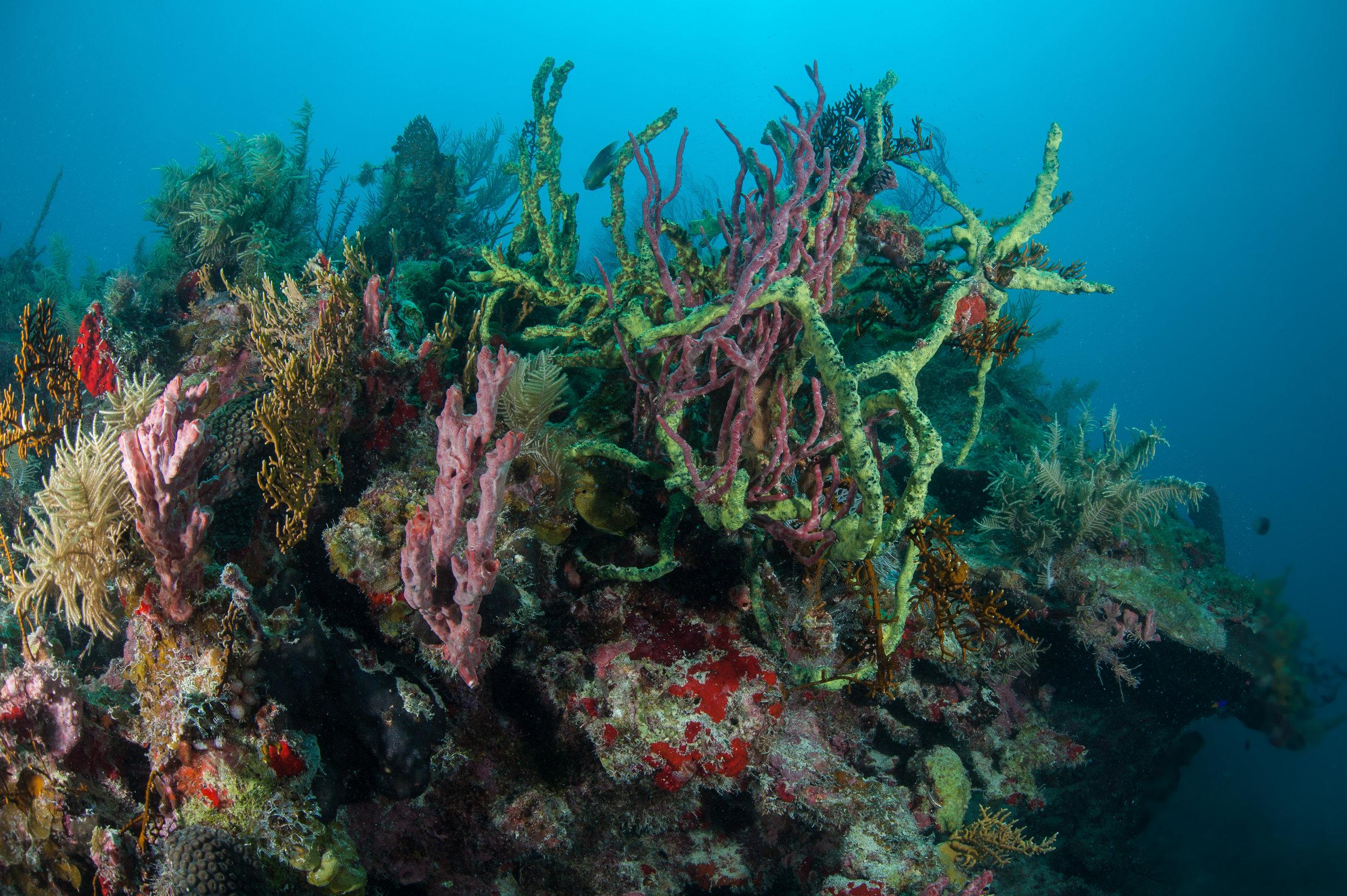 Reefs of Miskito Cays