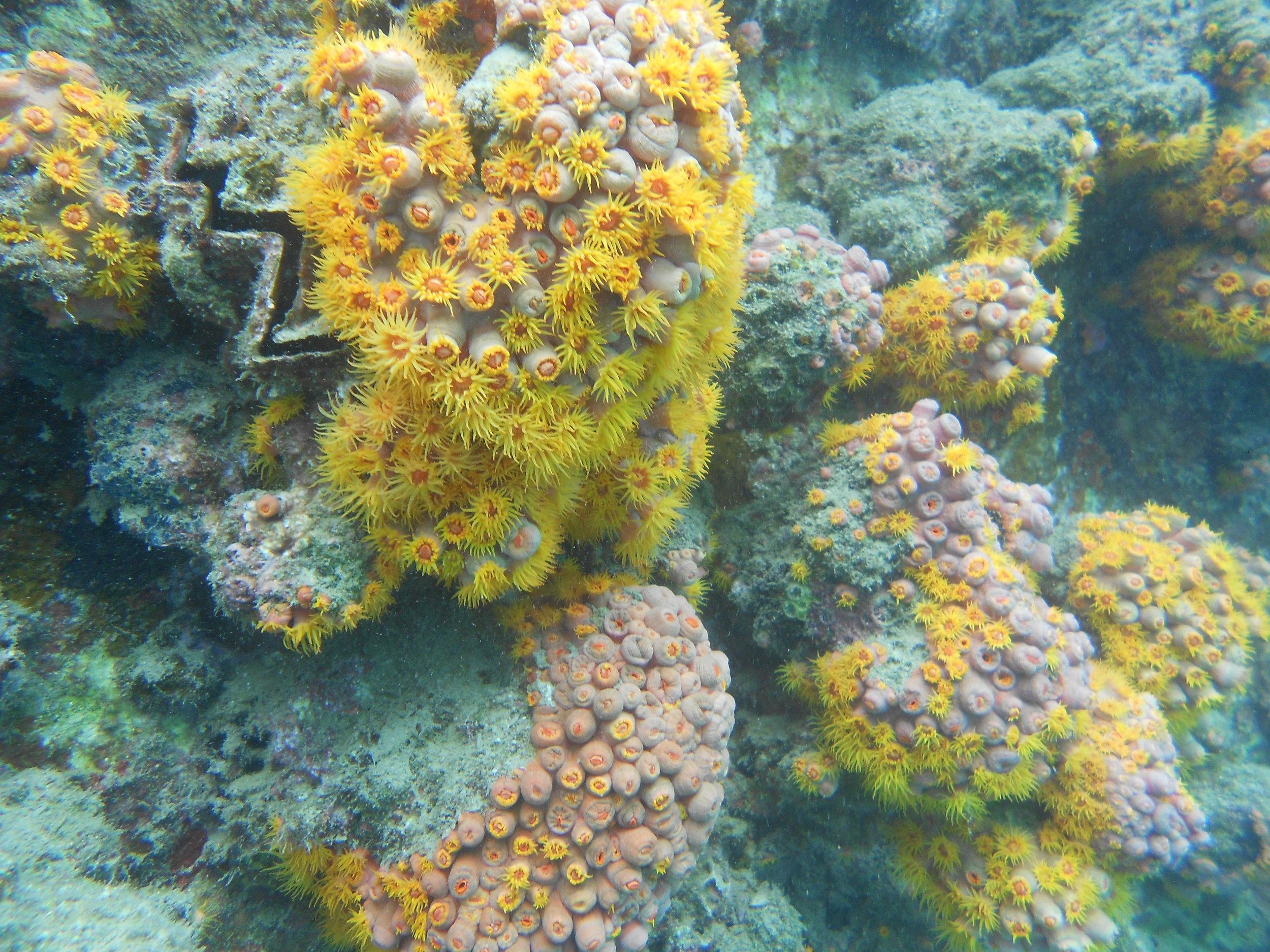 Taiwan corals