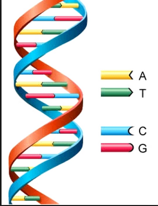 Click picture to get to Organizational DNA Determination