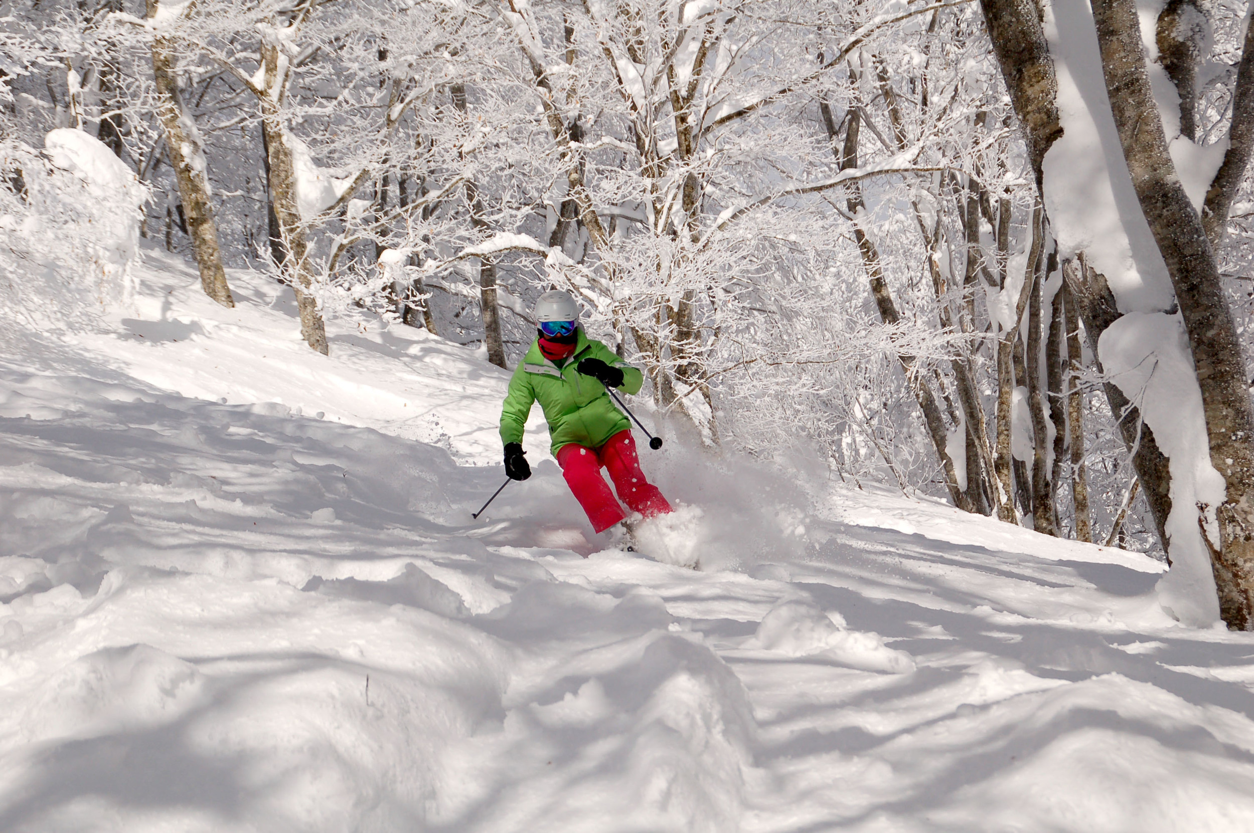 Pure Snow standing out in Hakuba