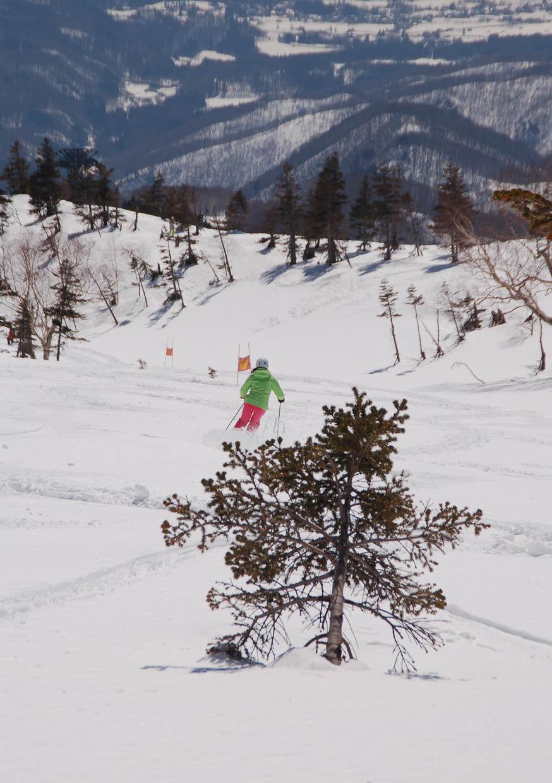 pure brandz hakuba heli skiing downhill