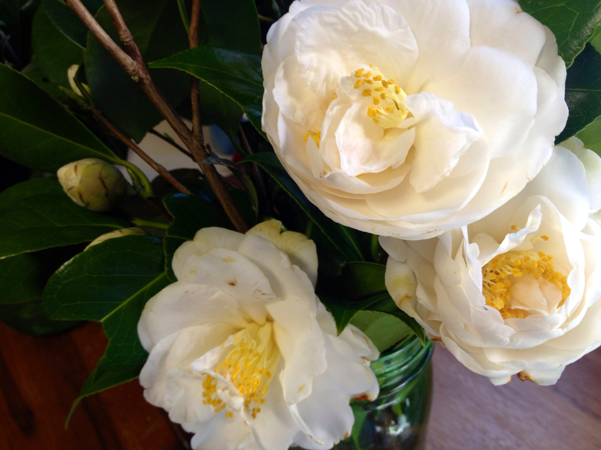 what is the state flower of Alabama the camellia Martie Duncan