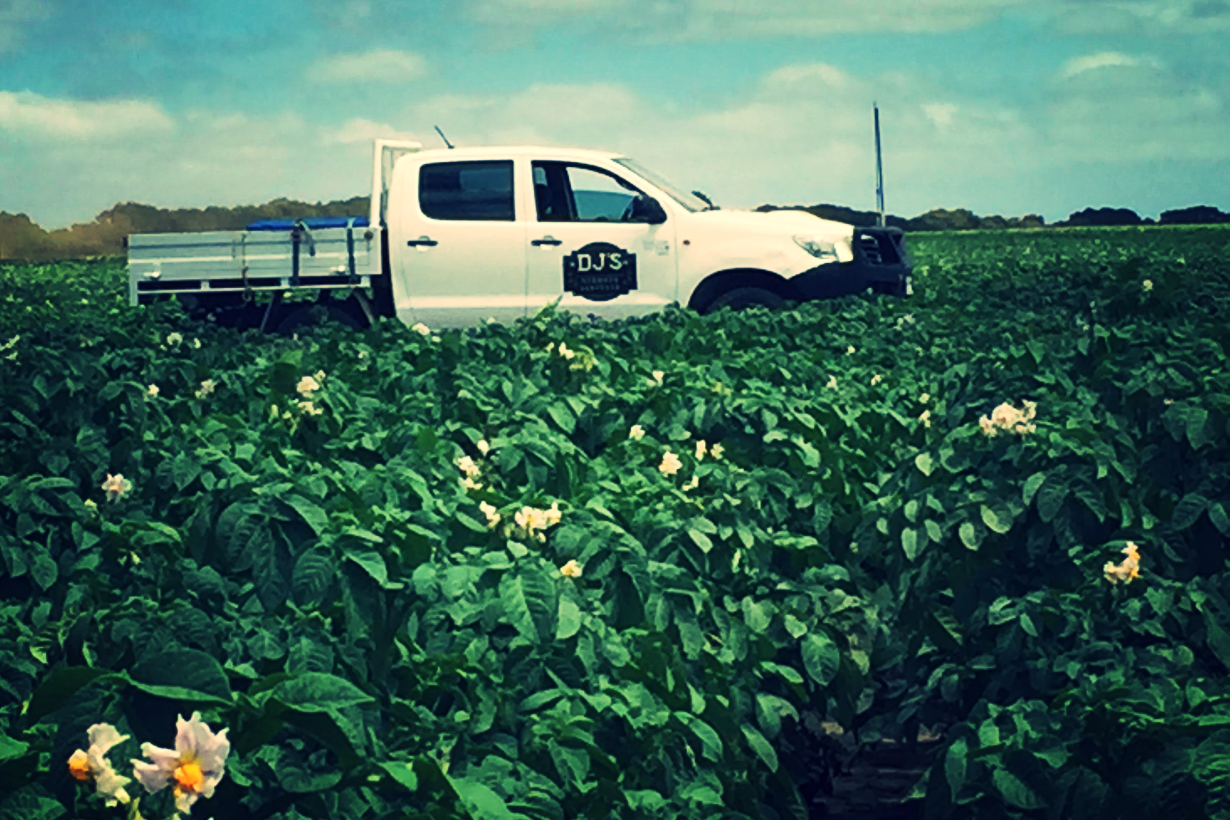 Row Crops - Click for services for potato, onion & garlic producers. We are here to help
