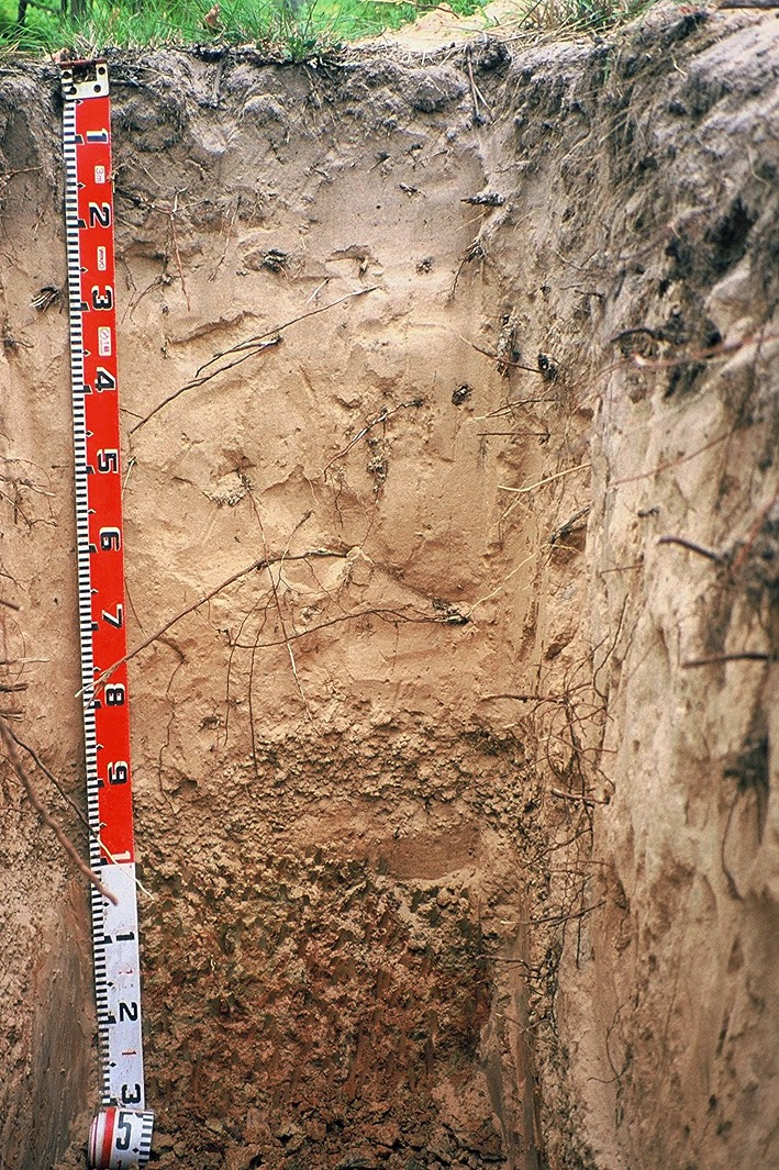 PIC: Sandy soil with clay and gravel at 1.0 metres depth. Did you know? Sandy soils generally have clay/gravel underneath, sometimes this is at greater than 3 m depth, and often vineyards on the tops of hills have more vigour than those at the bottom!