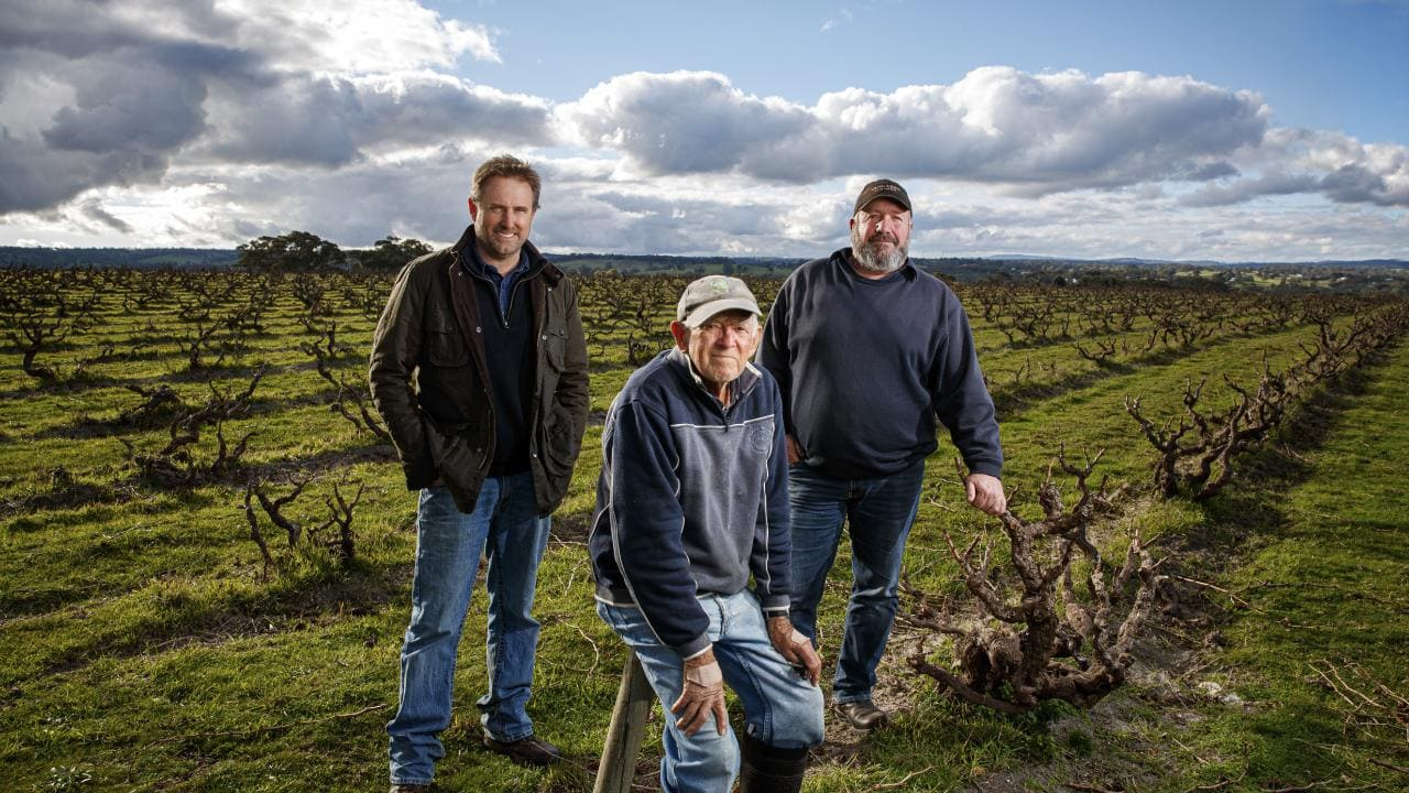 High Sands Grenache vineyard with Yangarra crew - (c) Advertiser Press.