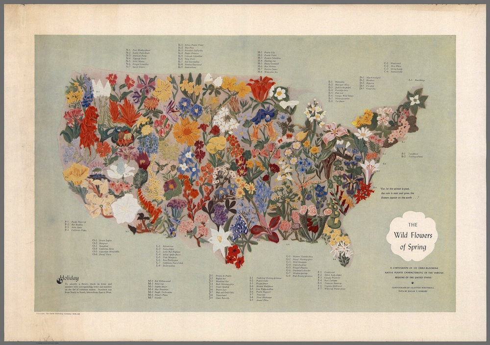 """The Wild Flowers of Spring,"" Clayton Whitehill and Edgar T. Wherry, 1955."