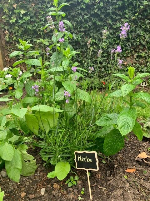 nurture garden 4.jpg