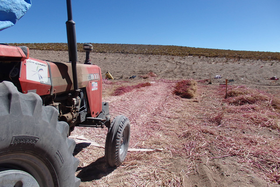 Tractor used for threshing quinoa grains, community of Copacabana, Nor Lipez (Photo: Maurice Tschopp)