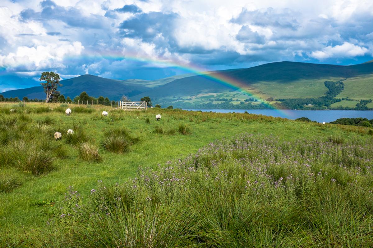 Scotland-2013-7.jpg