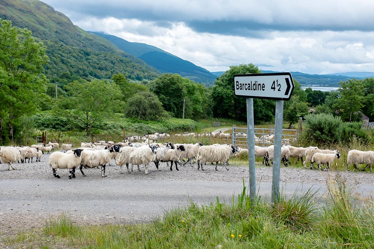 Scotland-2013-111.jpg