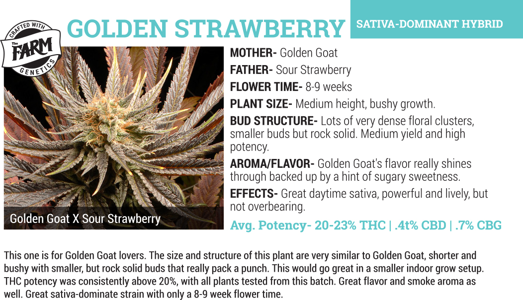 golden strawberry wholesale cannabis