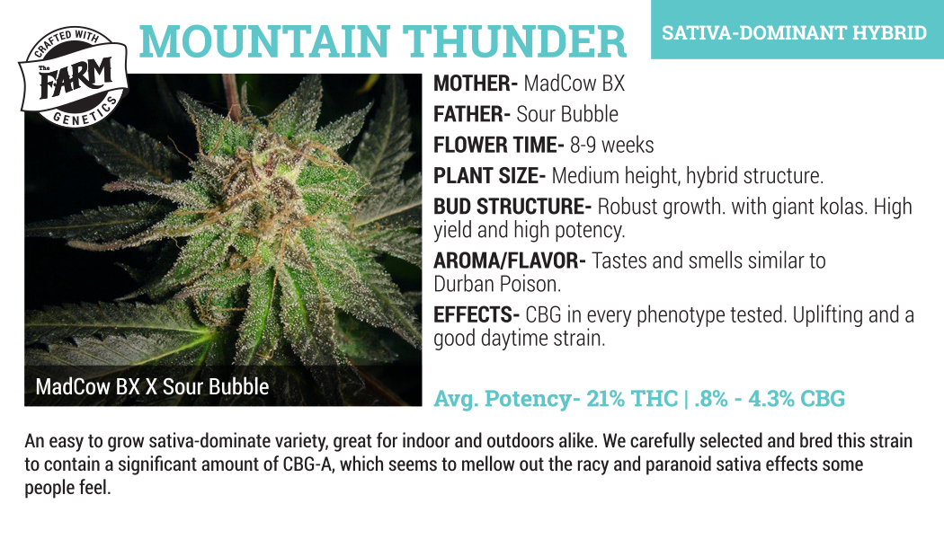 mountain thunder cannabis flower for sale wholesale