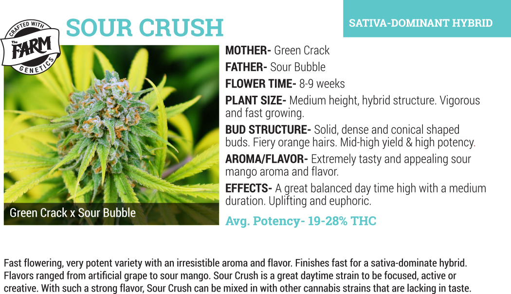 sour crush cannabis flower whoesale