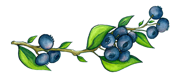 blueberriesweb.jpg