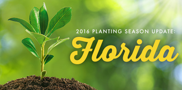 2016-season-growing-update-Florida.jpg