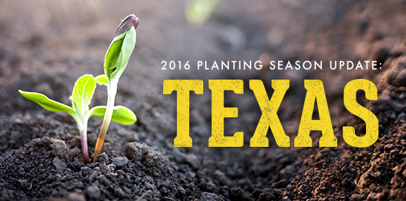 2016-season-growing-update-Texas.jpg