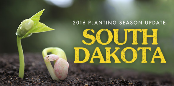 2016-season-growing-update-South-Dakota.jpg
