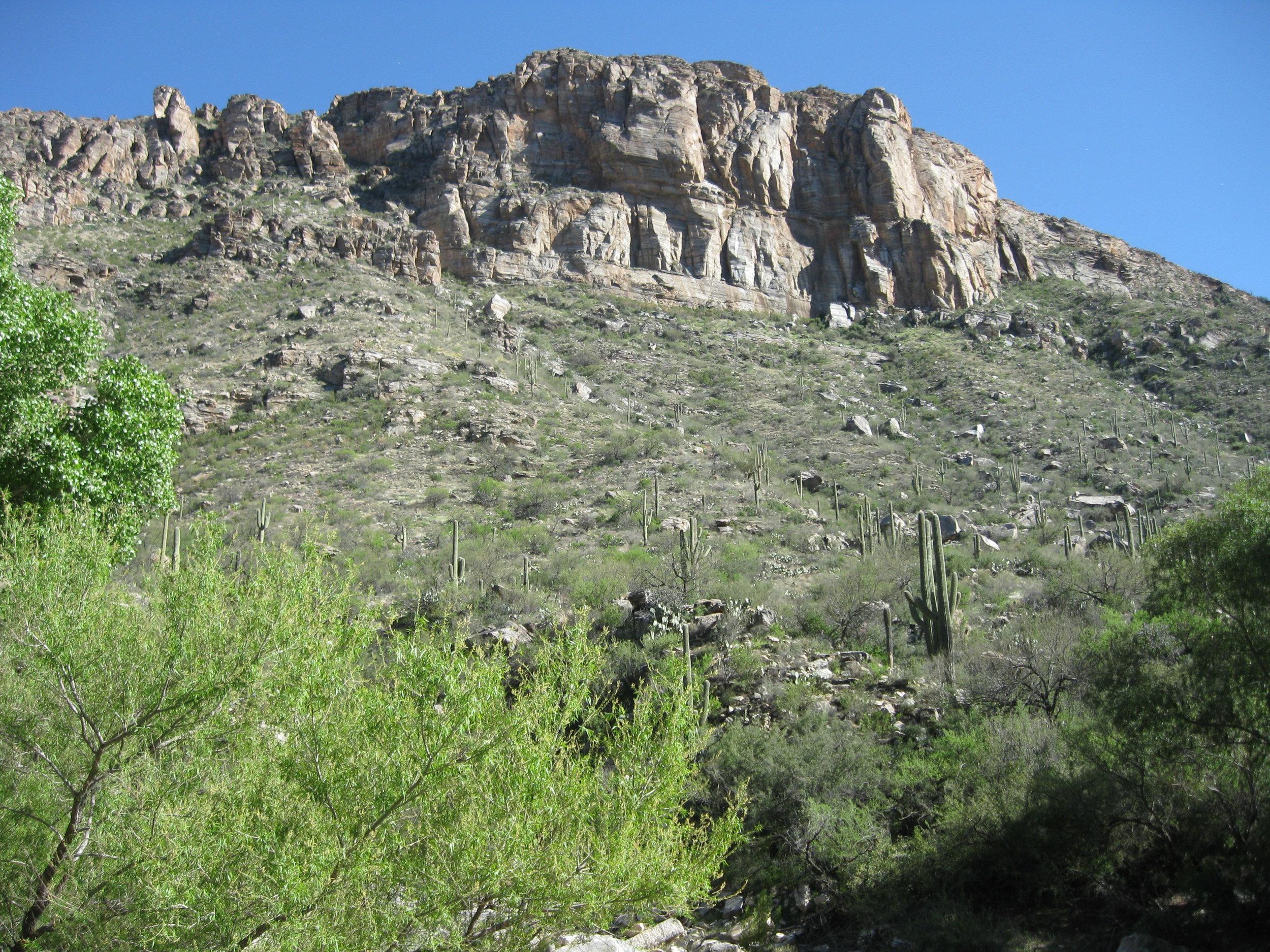 Southwest Desert.jpg