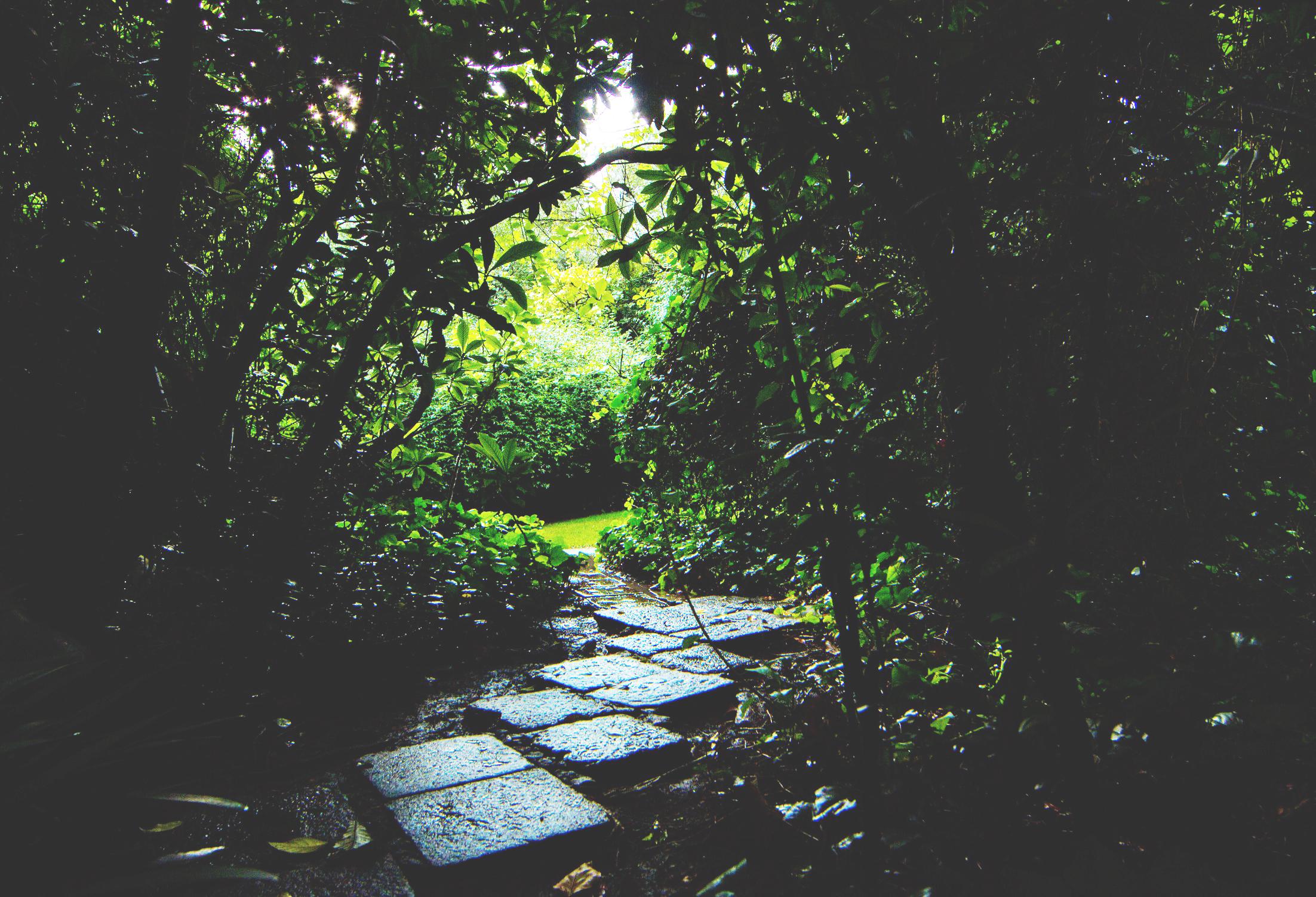 Jardin casa Barragán. rotativo.com.mx
