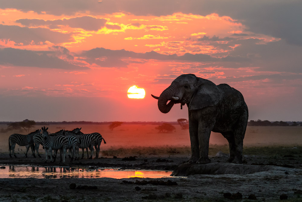 Kwando Nxai Pan elephant and zebra sunset.jpg