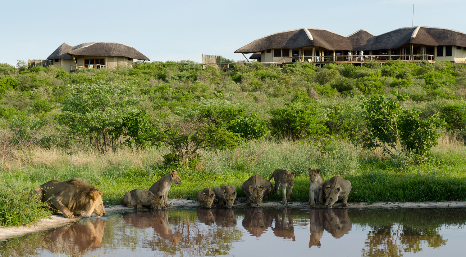 Kwando Tau Pan lions at waterhole.jpg