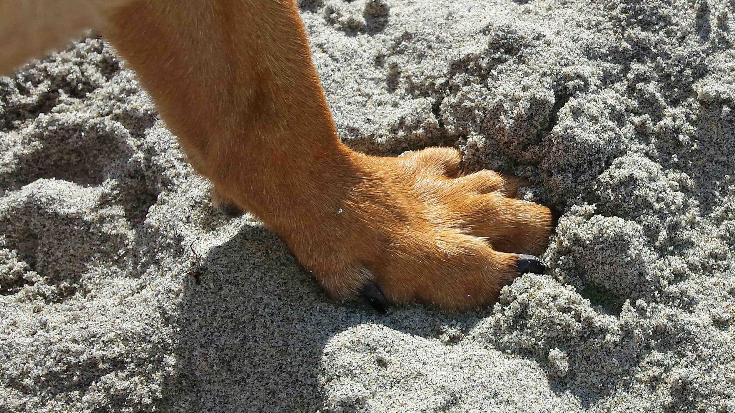 Me, Doodle, at Dog Beach