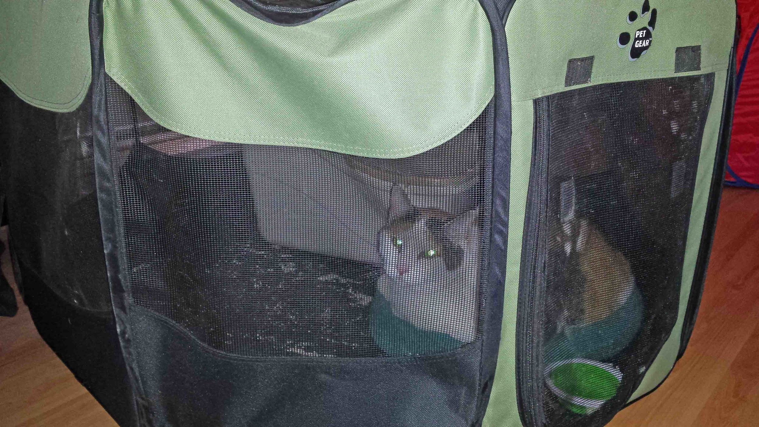 Tia goes camping. This is her condo, after being in the small to-go bag for the evacuation trip. These fold out pet soft-sided playpens are perfect!