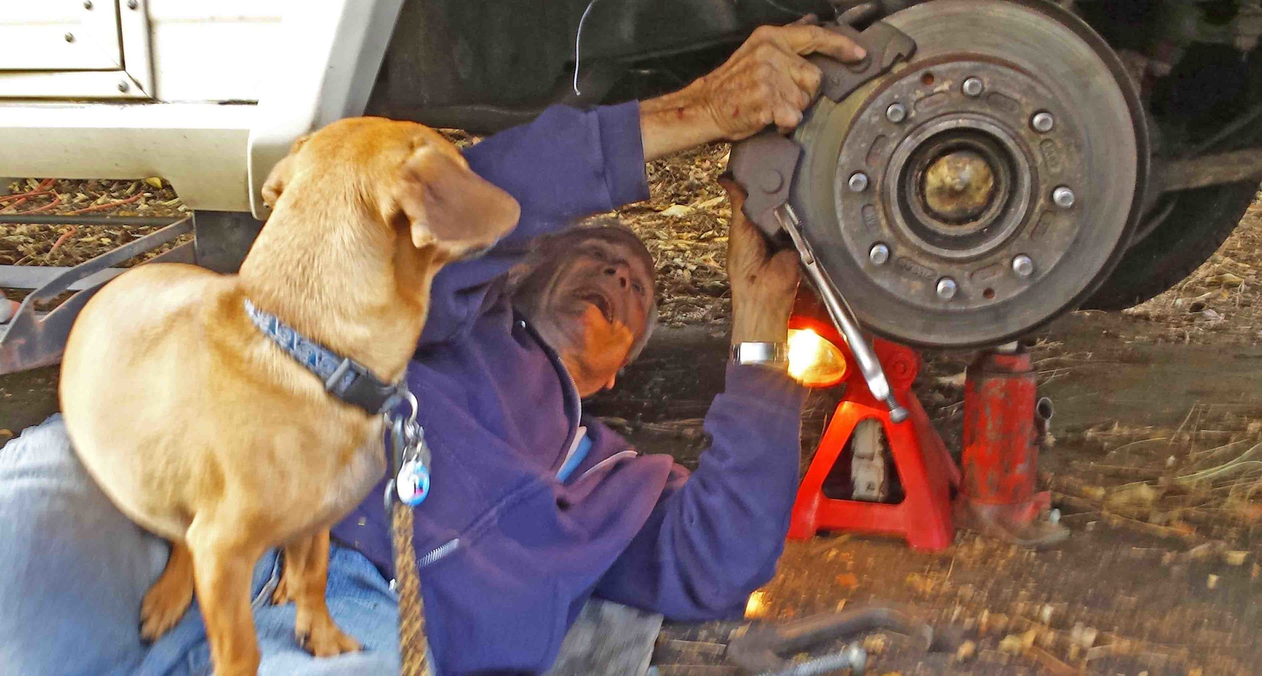 grand dog, dad passing on good mechanic tips to Doodle_edited-1.jpg