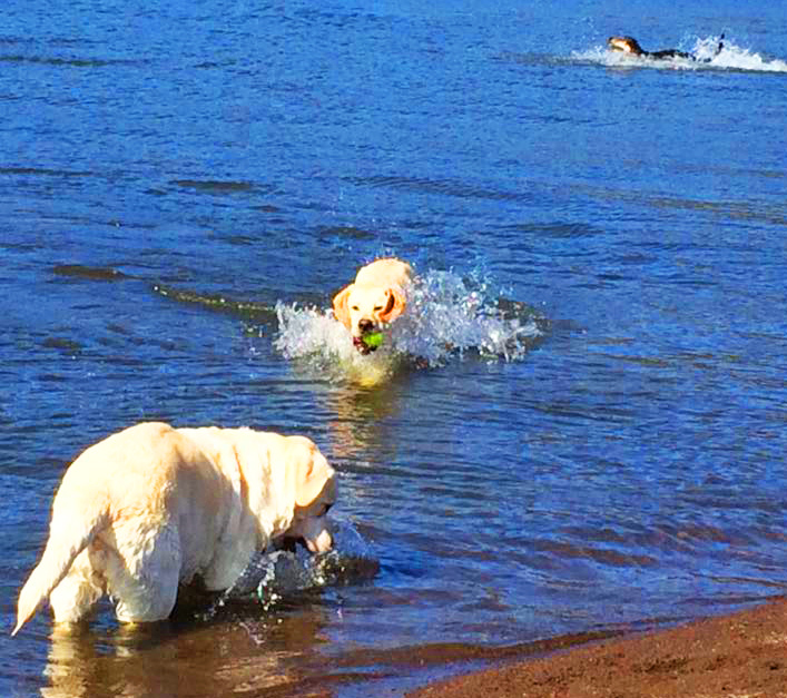 Beach = sand! Lab road trip      = water play = endless summer = endless holiday = any dog day!