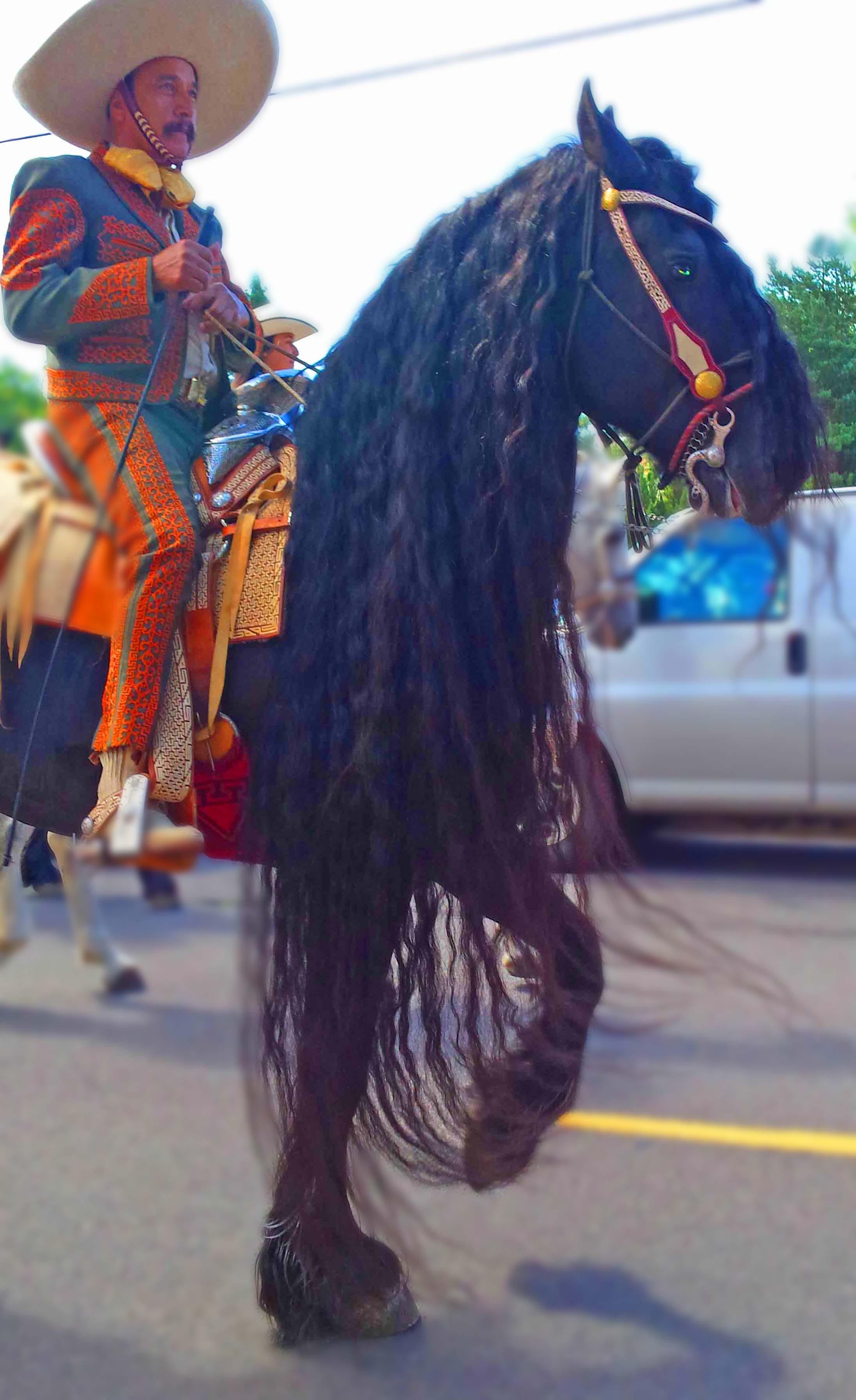 Hola caballo and caballero! Son muy guapo!