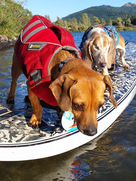 A summer dog day at  DogDiary . That's me, Doodle, hanging 20 toes on the nose of a SUP board. My big bro Dude is right behind.  Photo copyright: Barb Ayers DogDiary.org