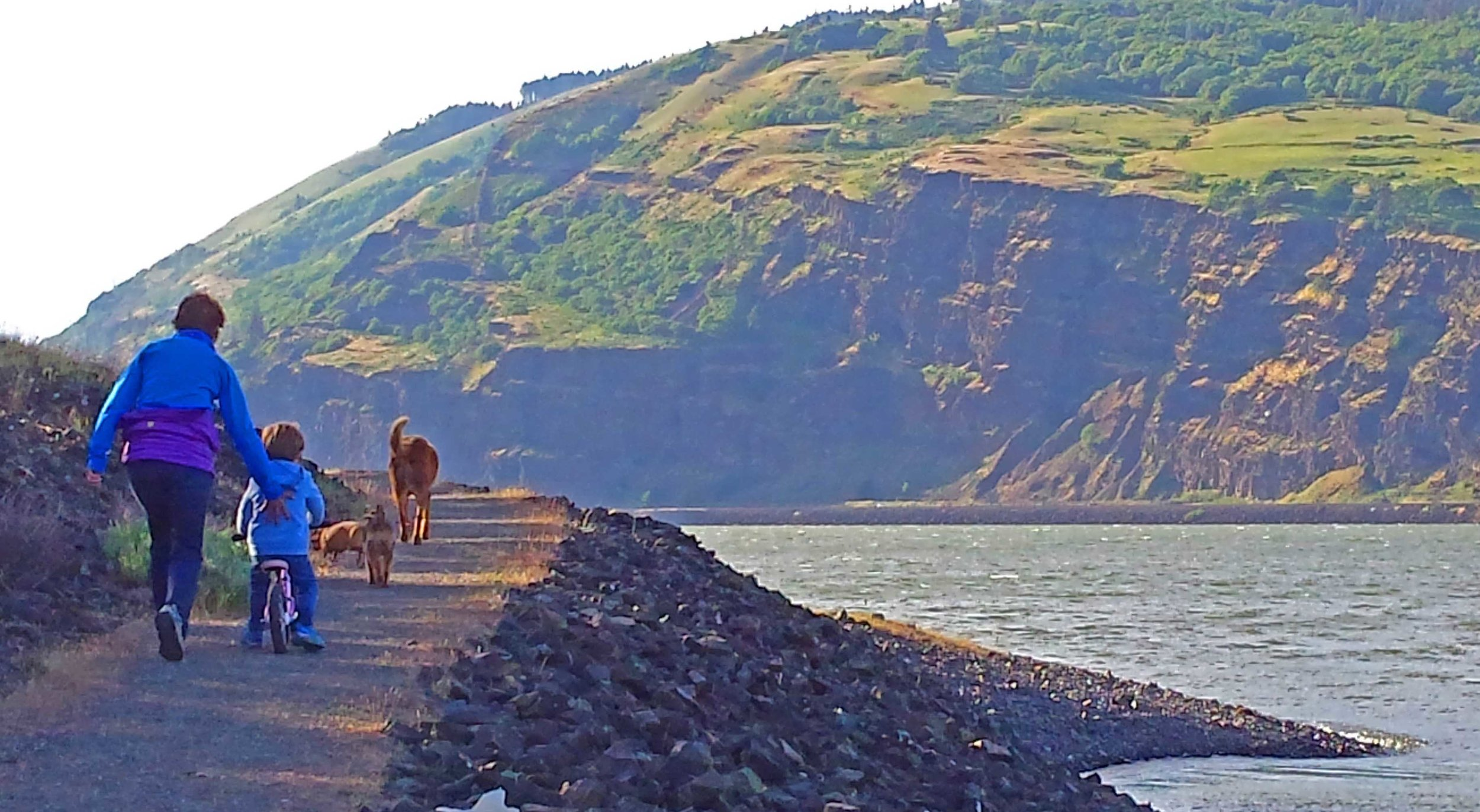 Mosier on a normal day.         Photo: Barb Ayers, DogDiary.org