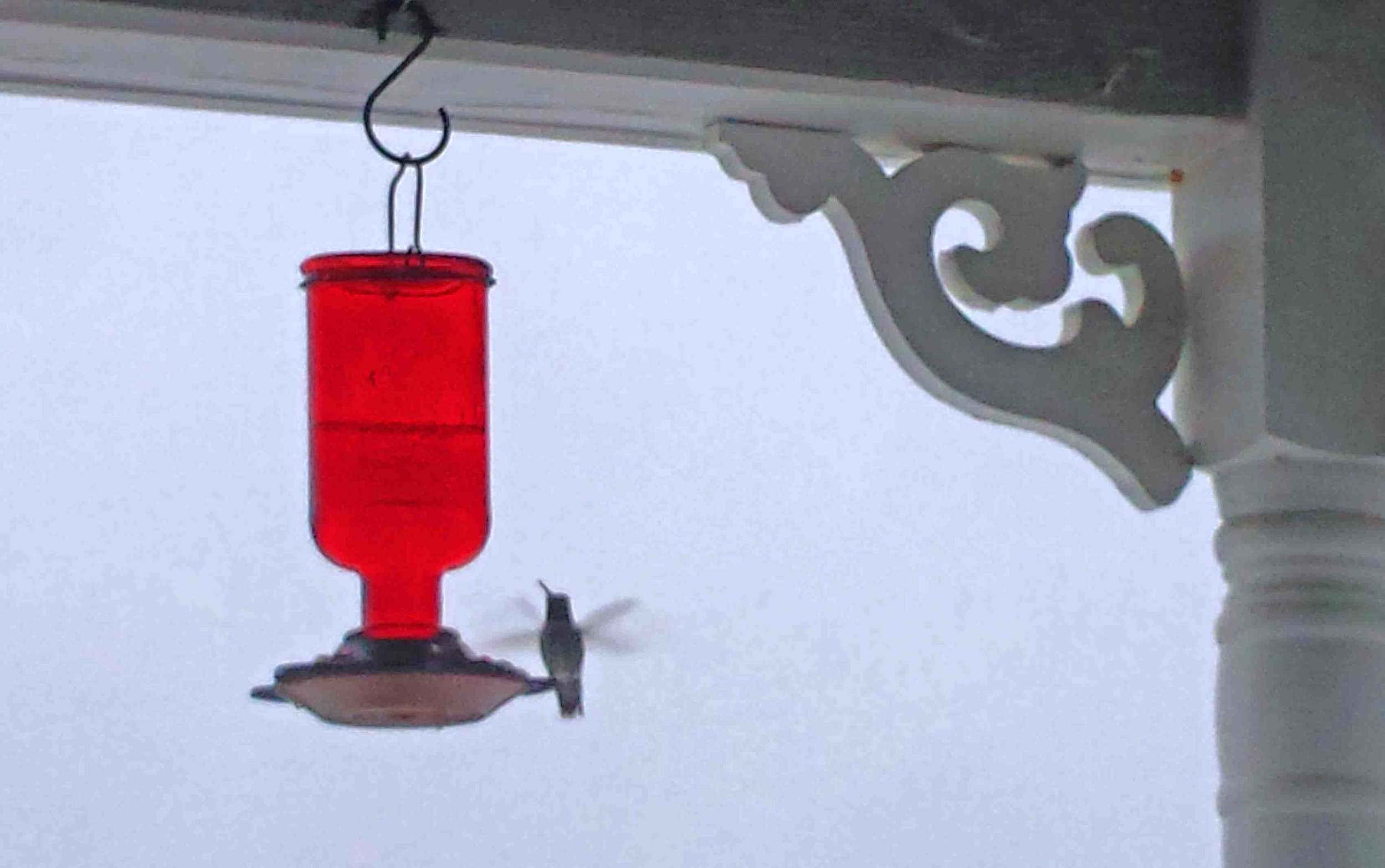 Our hummer friend buzzed me on the porch - that's how I knew to defrost his feeder.                          Photo:   (c) Barb Ayers, DogDiary.org