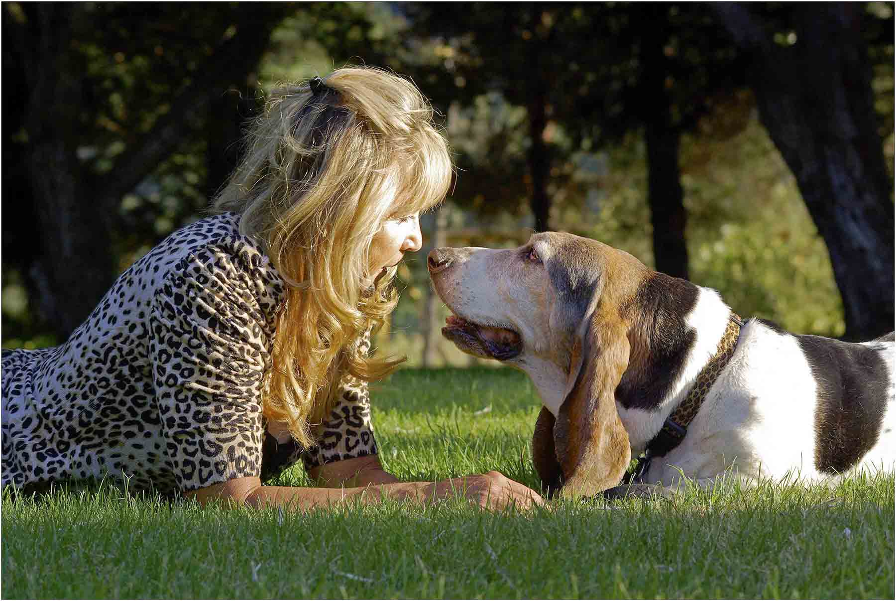 Surf Dog Diaries patriarch Elvis shared basset insight with his dog mom Barb Ayers for 13.5 years (95 in dog years.) His legend and advice lives on through the secret surf dog diaries.    Photo: (c) Barb Ayers, www.DogDiary.org