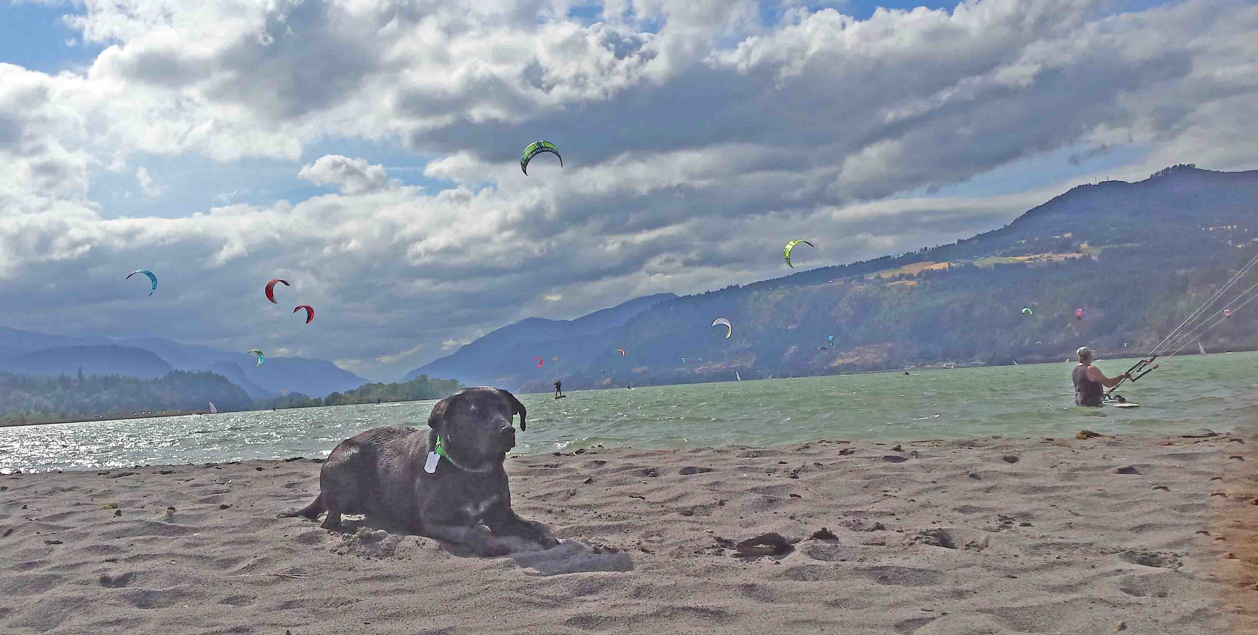 Beach dog Simon and kite surf dogs share the Dog River sandbar.    Photo (c) Barb Ayers, DogDiary.org