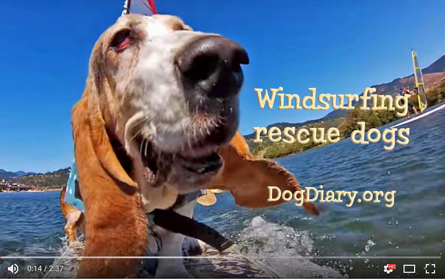 Winsurfing rescue dogs- shadow type_edited-1.jpg
