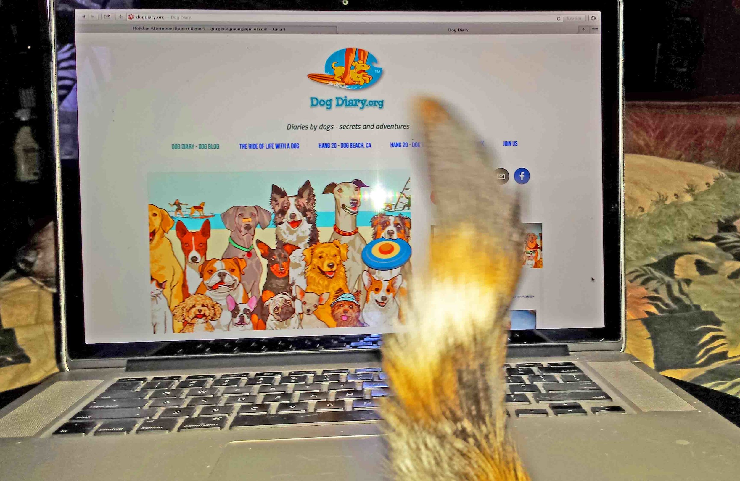 Cat threatens to take over the Dog Blog. HELP!!!!  Photo (c) Barb Ayers, DogDiary.org