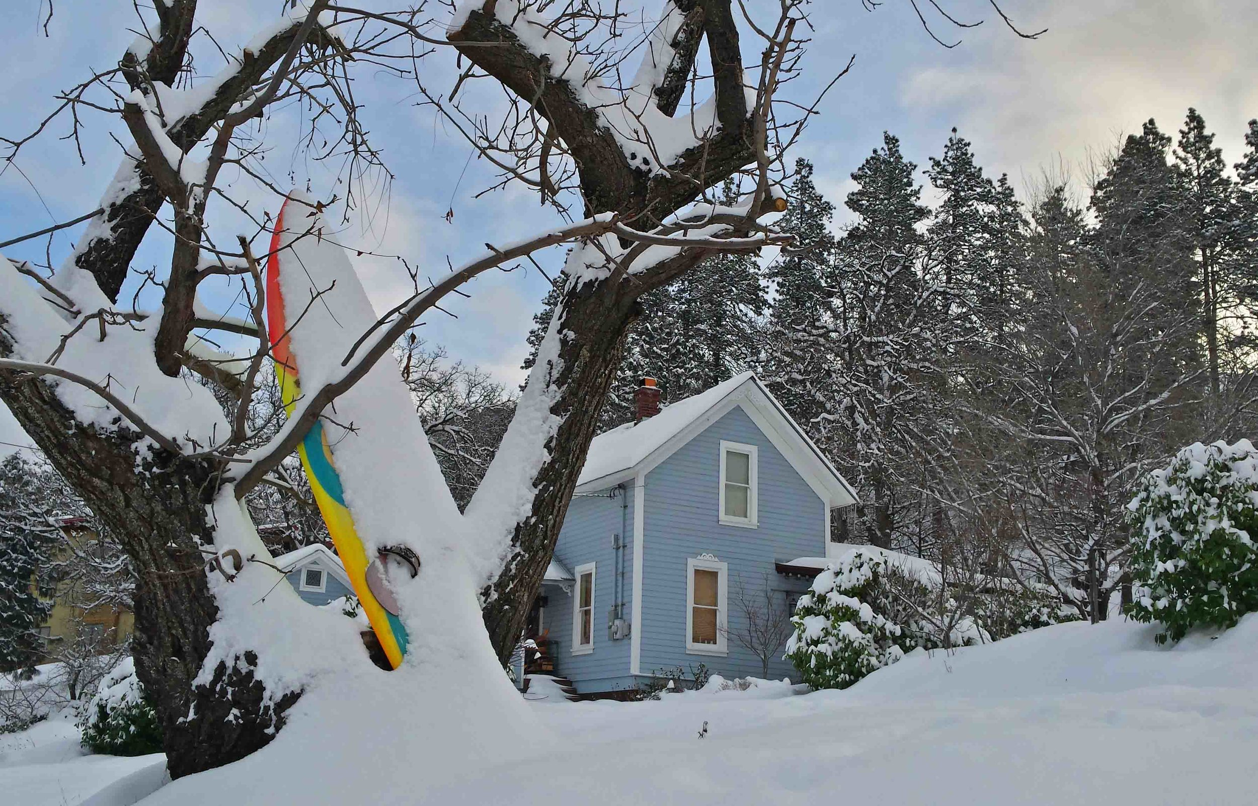 Our  Surf Dog Diaries  front yard this winter. Snowmeggadon!                                                     Photo (c) Barb Ayers, DogDiary.org