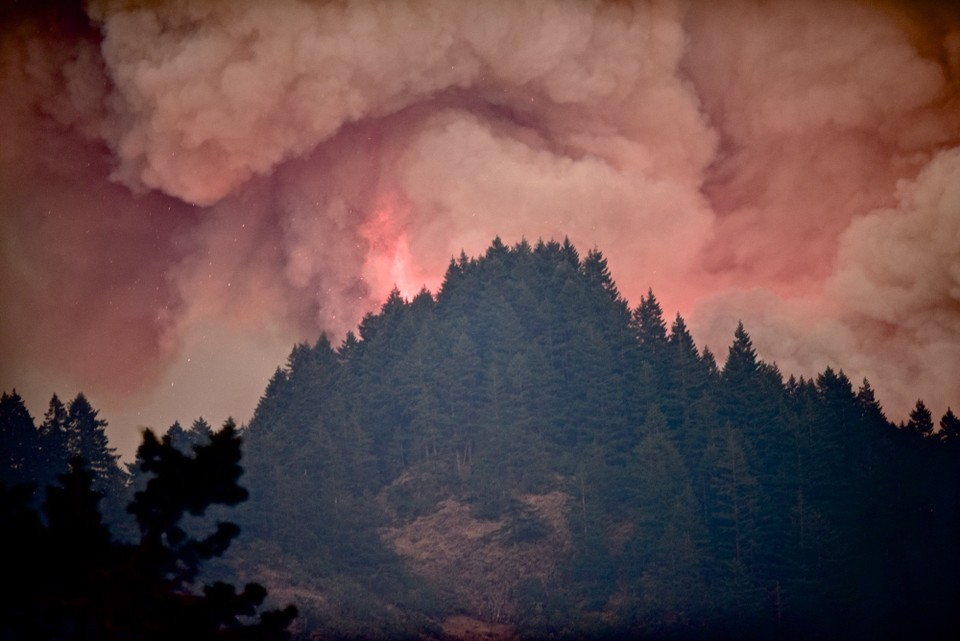 The Eagle Creek wildfire was started by a human. Please don't do that. No self respecting dog would start a fire .  Photo: The Oregonian.