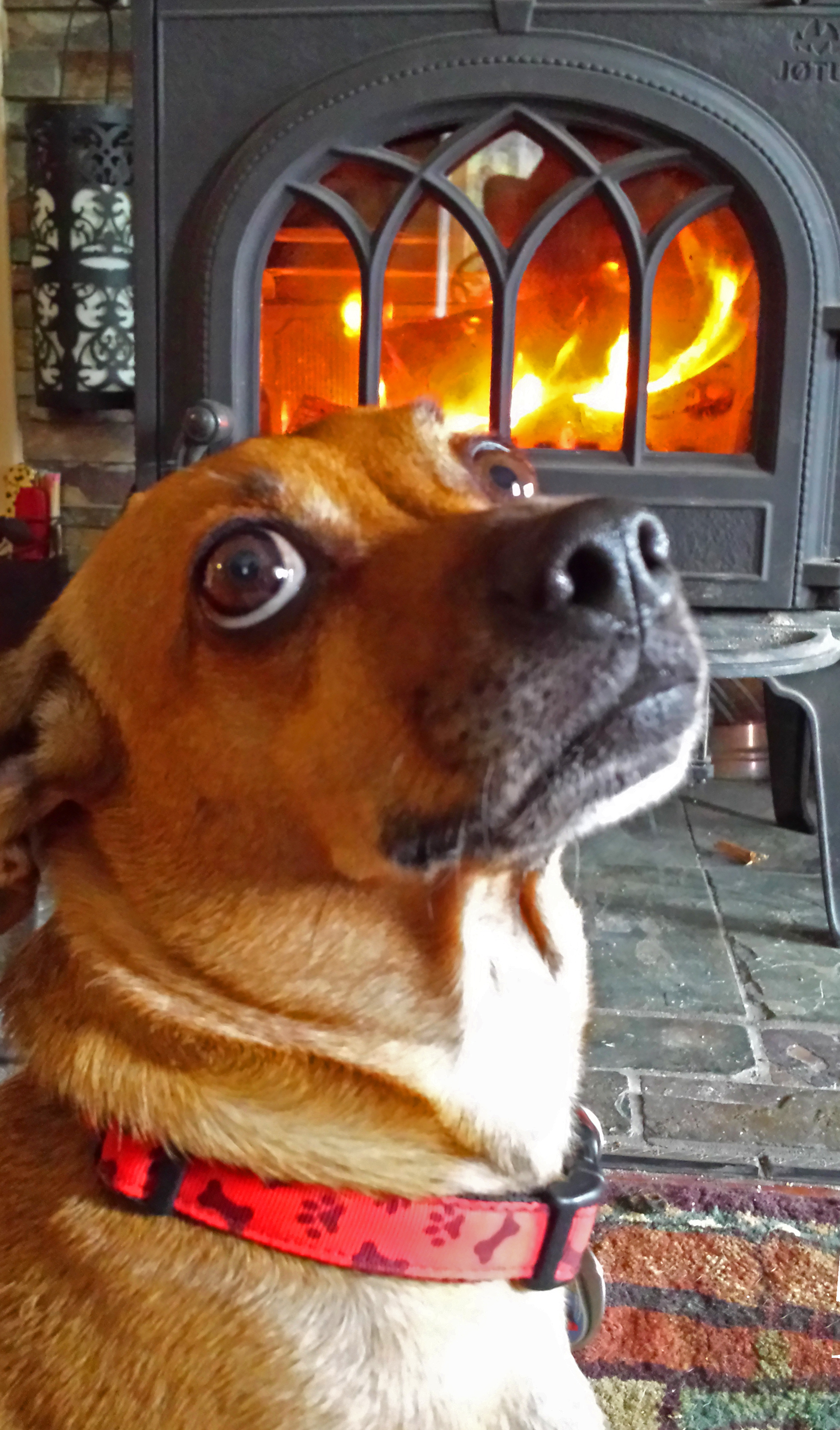 Come on baby, light my fire!            Photo: (c) Barb Ayers, DogDiary.org