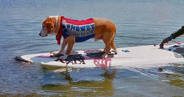Howdy in the 1990's. We surf dogs still windsurf on the same longboard today.   Photo: (c) Barb Ayers, DogDiary.org
